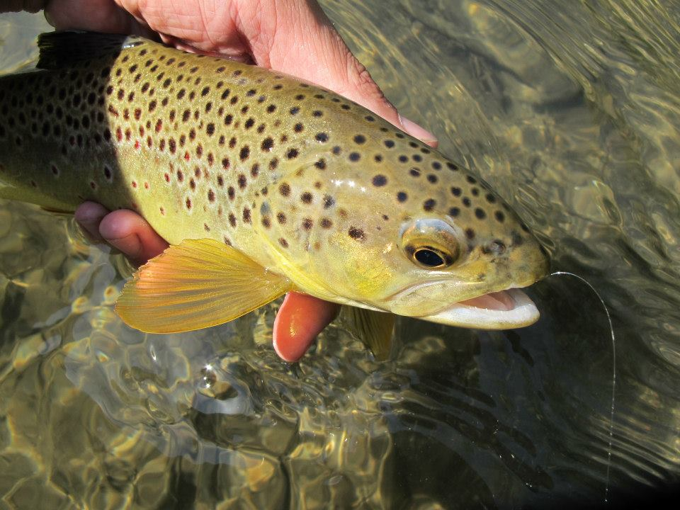 Fly tying with Dakota Angler & Outfitter at Lost Cabin Beer Co. in Rapid CIty, SD